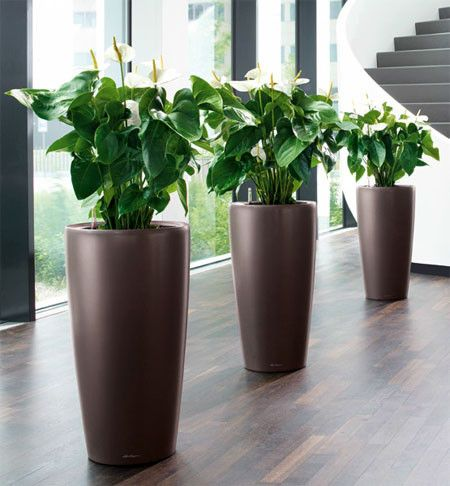 Indoor plants and pots services in Abu Dhabi