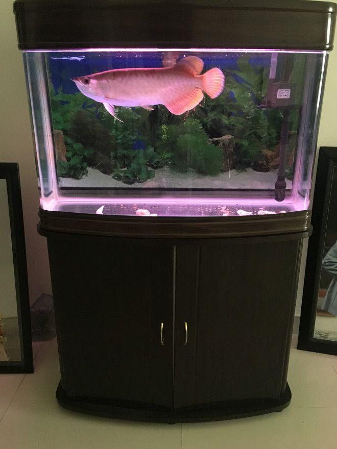 Beautiful aquarium tank without fish for immediate sale for Aquarium fish tank for sale
