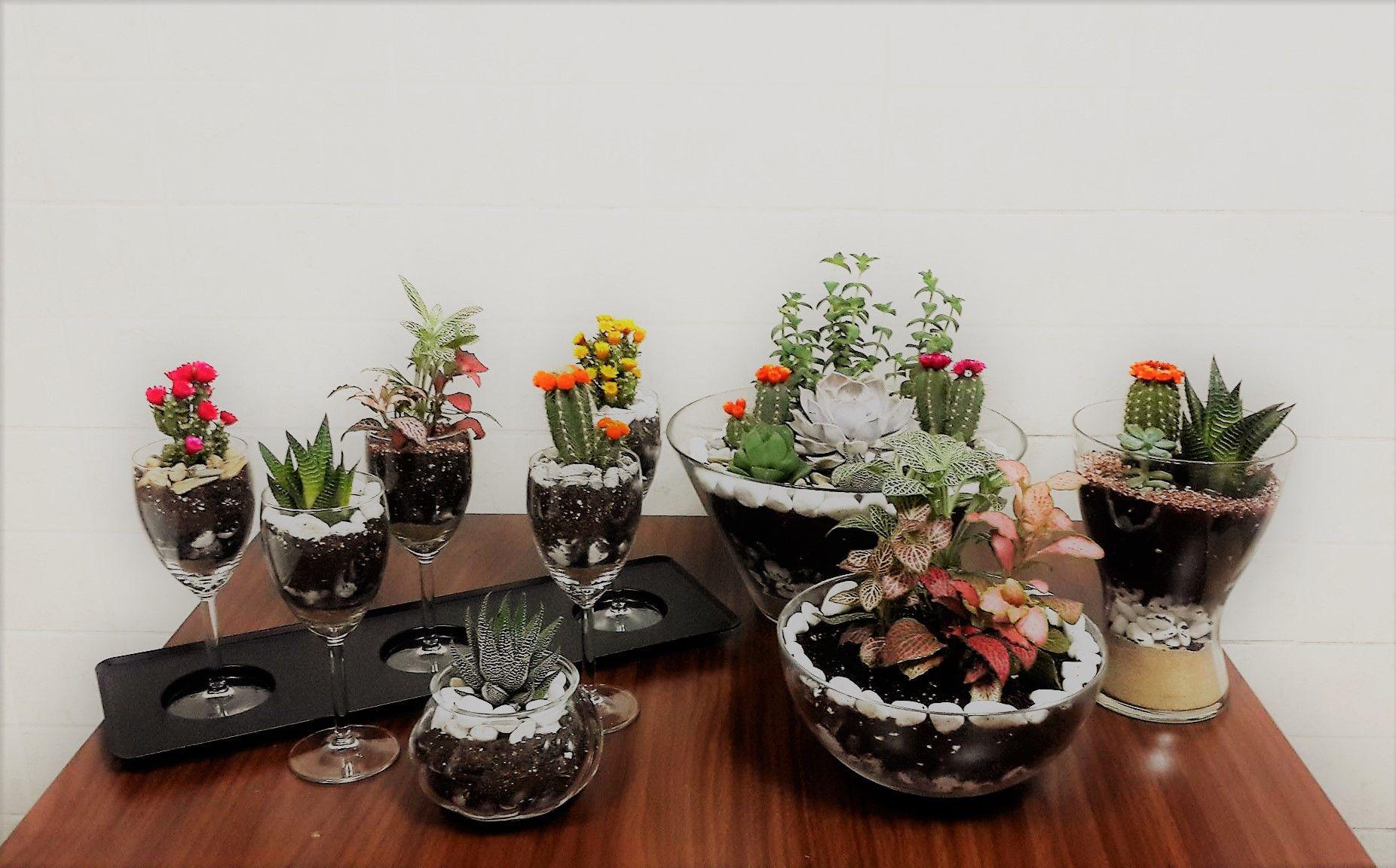 Decorative Indoor Plants Terrarium Big And Small Dubai