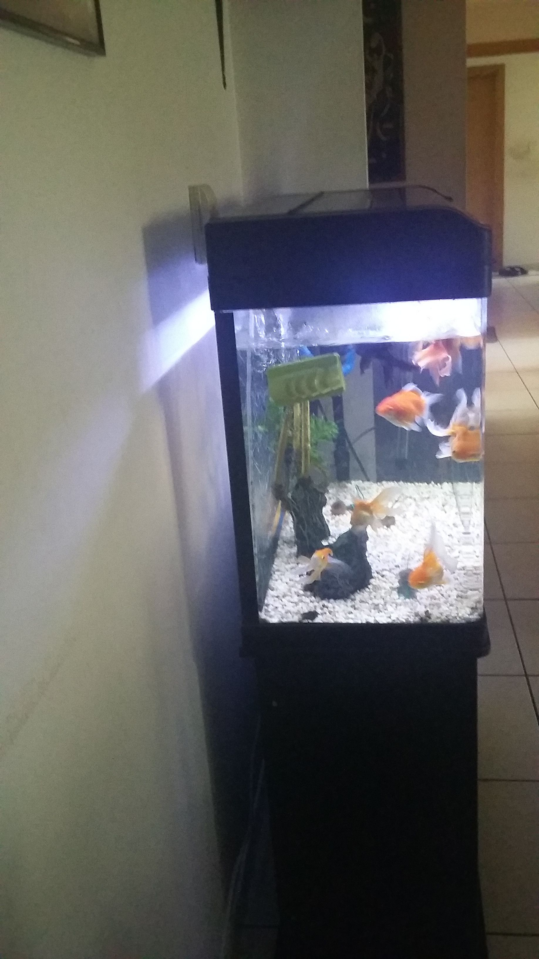 Large Fish Tank With Gold Fishes And Stand At A Throwaway Price In Dubai