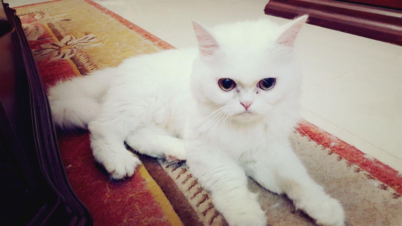 Tito And Liz Theyre The Cutest Cats Ever الشارقة الإمارات ستورات
