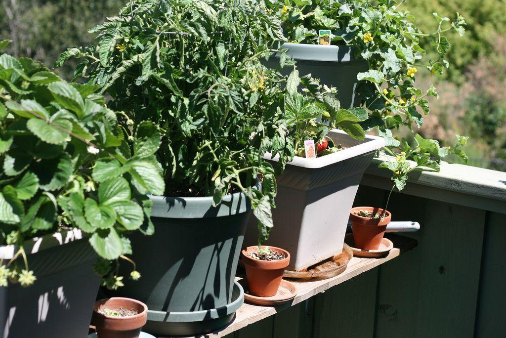 Grow Your Own Organic Garden In Abu Dhabi