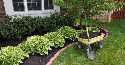 Landscaping and Garden