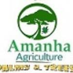 Amana's Store