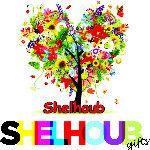 Shelhoub's Store