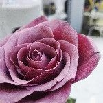 Ayala's Flowers