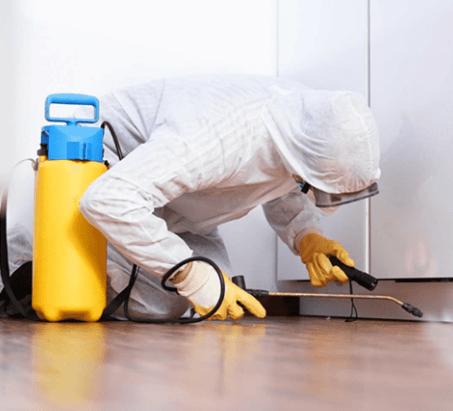 AL RASA PEST CONTROL & BLDG. CLEANING SERVICES 1