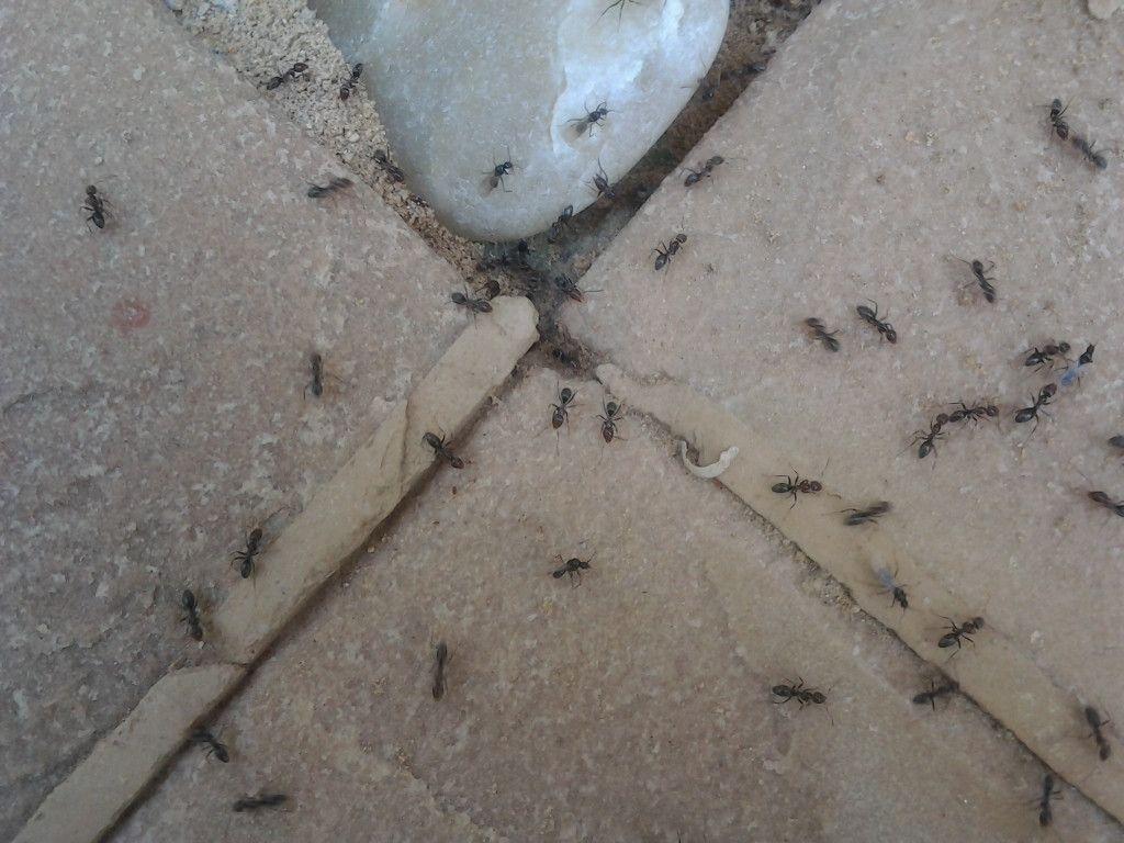 EcoCare Pest Control 1