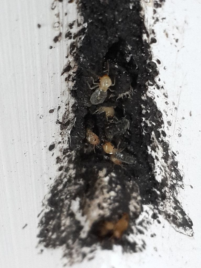 EcoCare Pest Control 2