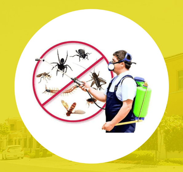 Star City Pest Control & Cleaning 1