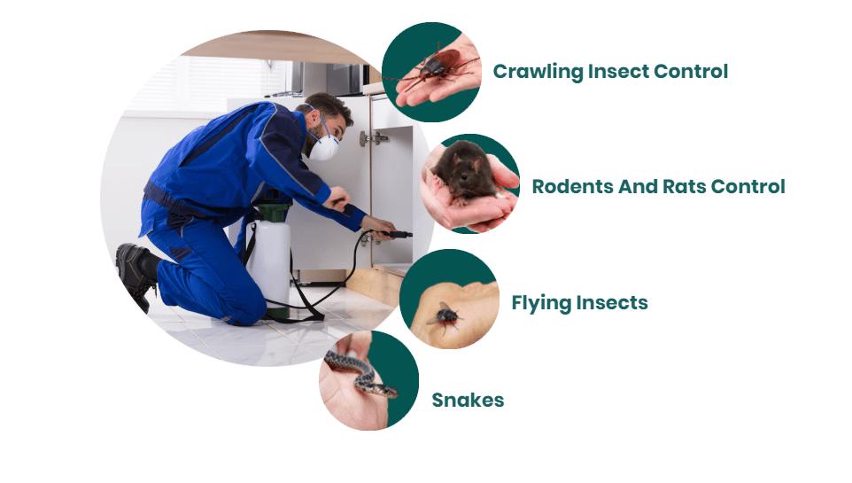 United Pest Control  0