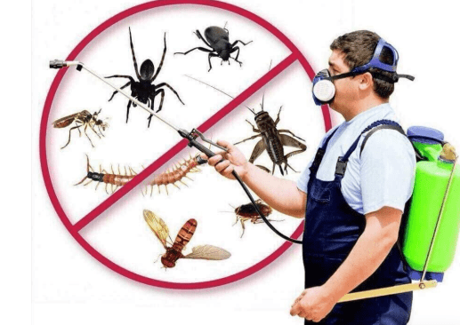 Express Pest Control And Cleaning Services 2