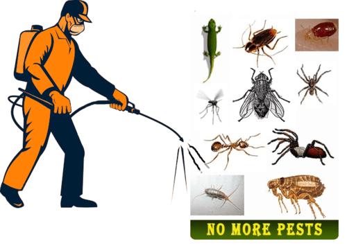 AlMatafi Pest Control 2