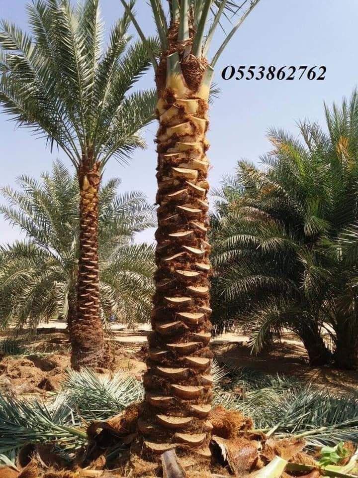 Al Jazeera Landscape 4