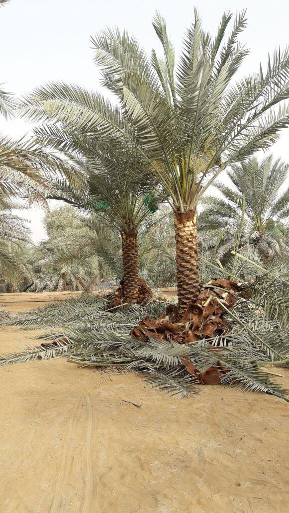 Syed Bashir Landscape Gardening  1