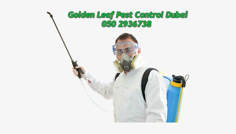 Golden Leaf Pest Control & Cleaning 2