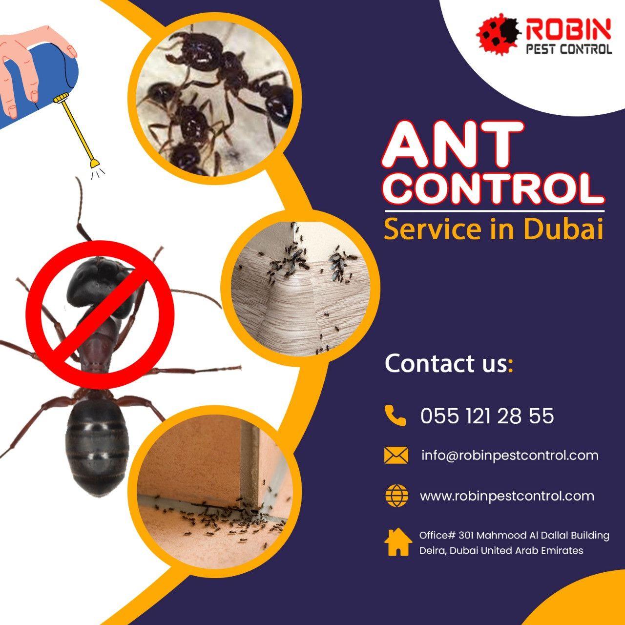Robin Pest Control 2
