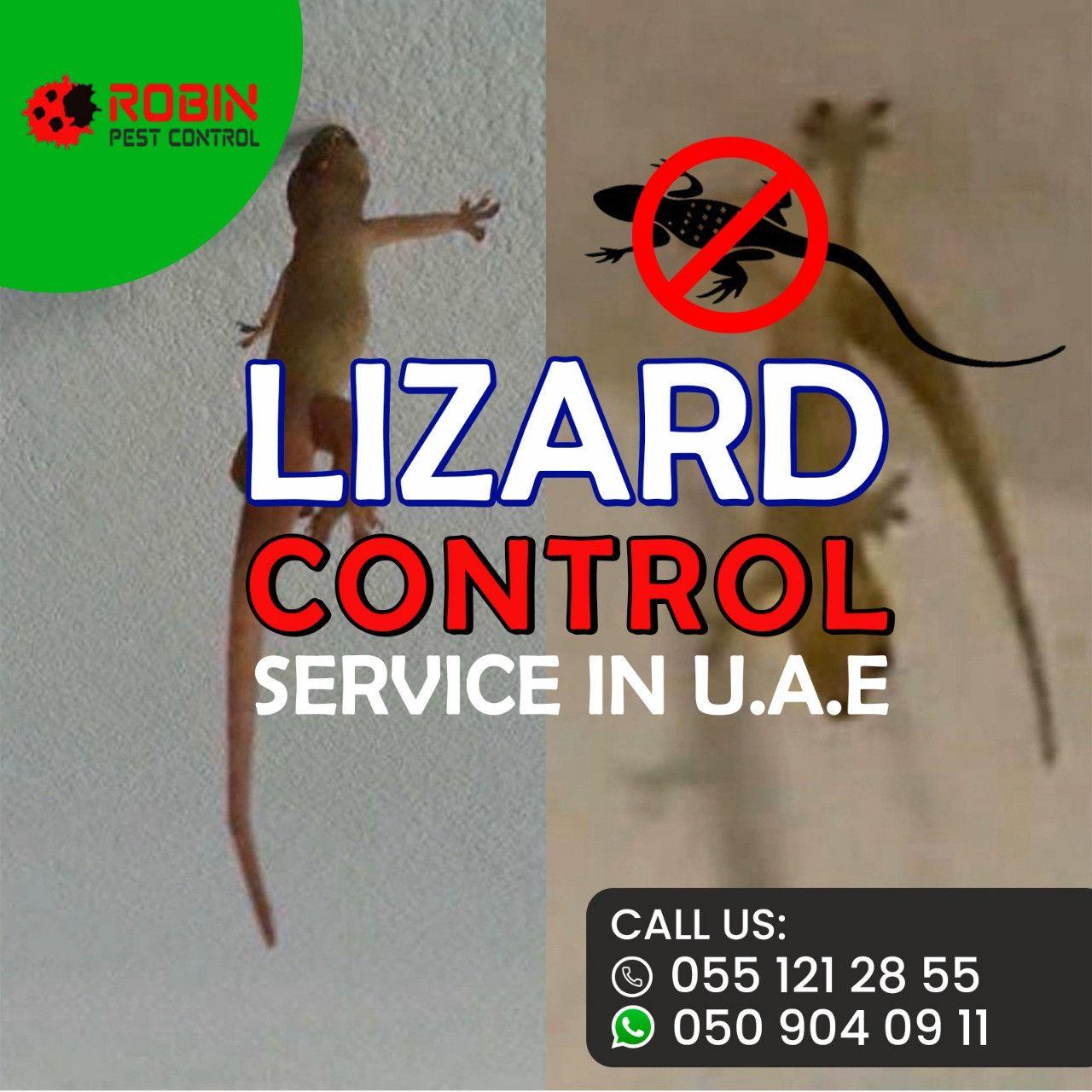 Robin Pest Control 6