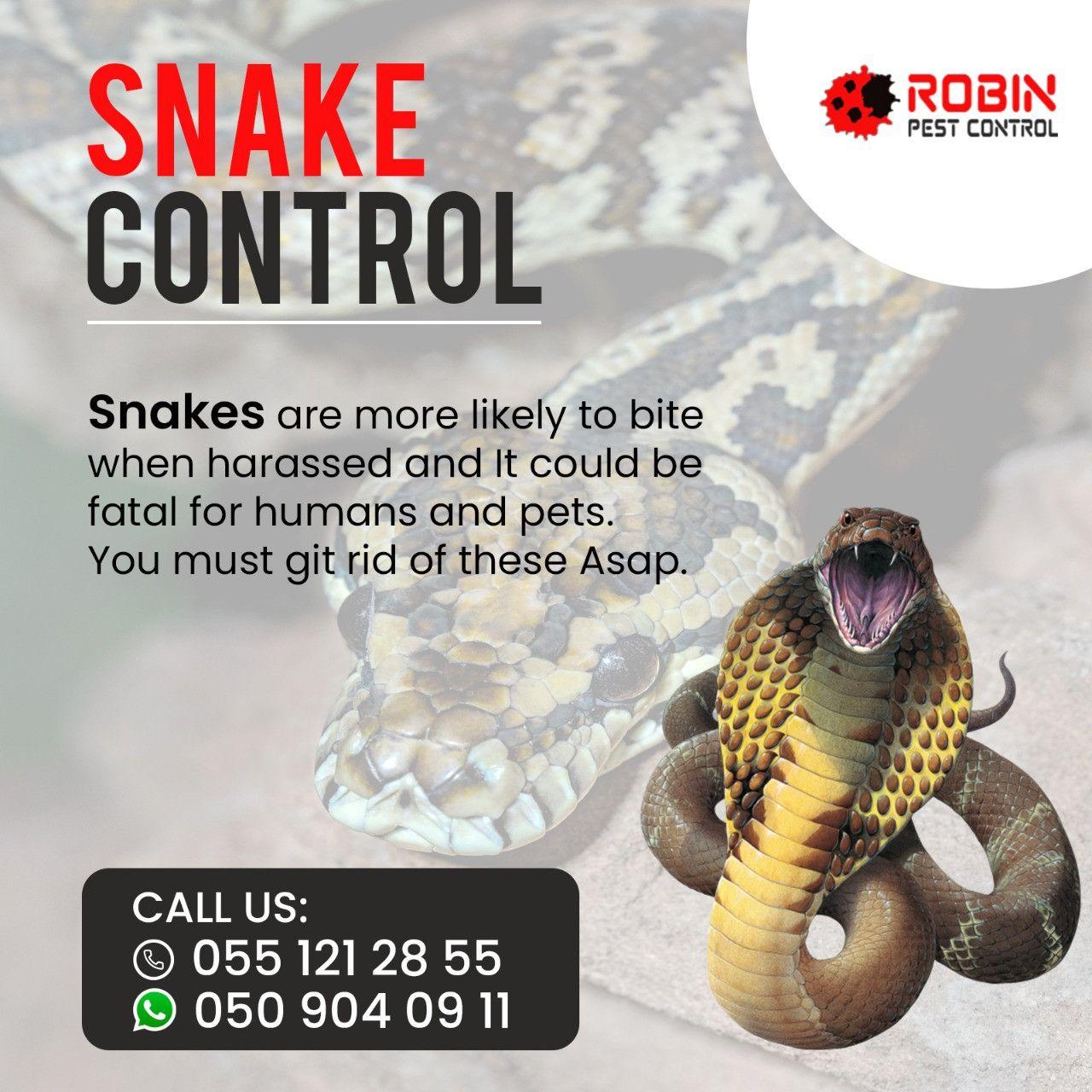 Robin Pest Control 11